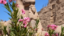 Experiente culturale in Egipt – Croaziera pe Nil
